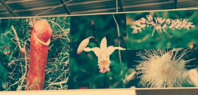 Local Cambodian flora