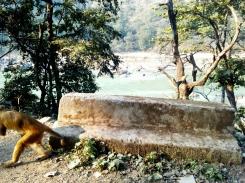Ganges River, Rishikesh